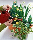 Orange Metalljardiniere bepflanzen: 4/5