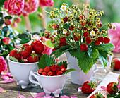 Fragaria vesca bouquet in cup, cups with Fragaria