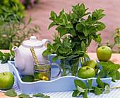 Bouquet and tea from Mentha x rotundifolia, in jar, jug