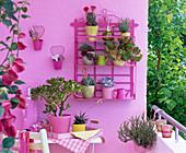 Balkon für Faule : Sukkulenten und Kaktus in kleinen Töpfen