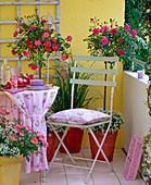 Vorher - Nachher - Balkon : Rosa (Rosen), Stämmchen und Busch