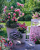 Rosa 'Geoff Hamilton' (Englische Rose) von David Austin,