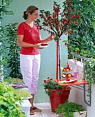 Naschbalkon : Frau erntet Ribes (Rote Johannisbeeren)