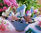 Lilium (Lilien) in Schale mit zusammengerollten Servietten und Besteck