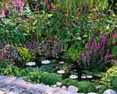 Mini - Teich aus Plastik im Staudenbeet bepflanzt mit Nymphea (Zwergseerose)