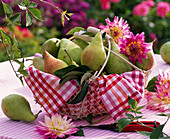 Pyrus in metal basket with napkin, dahlia, scissors