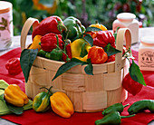 Capsicum (Paprika, rot, grün, gelb) in Korb auf dem Tisch, Paprikablätter