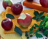 Malus (Äpfel), ein Apfel angebissen
