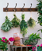 Herbs hung up to dry at the coat hanger, Salvia, Origanum