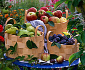 Pyrus, Prunus, Malus in baskets on the table