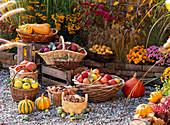 Baskets of freshly harvested cucurbita (pumpkin), malus (apple)