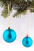 Türkise Weihnachtsbaumkugeln an Zweig von Pseudotsuga (Douglasie)