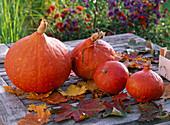 Cucurbita hokkaido (Hokkaido pumpkin) with autumn leaves