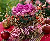 Brassica (Zierkohl), Topf mit Stroh umwickelt