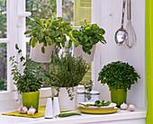 Kräuter am Fenster : Origanum (Oregano), Thymus (Thymian), Salvia (Salbei)