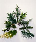 Zweige für Weihnachtsbinderei tannenförmig im Uhrzeigersinn