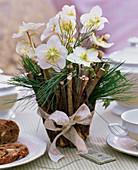 Helleborus niger (Christrosen), Blüten einzeln in Floristenröhrchen