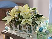 Weihnachtsgesteck mit Euphorbia pulcherrima (Weihnachtsstern)