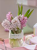 Hyacinthus (Hyazinthen) in Glas, dekoriert mit Tortenspitze