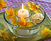 Windlicht in Glas in Schale gestellt, dazwischen Wasser mit Blüten von Narcissus