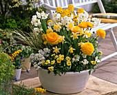 Weiß - gelbe Schale mit Ranunculus (Ranunkeln), Narcissus