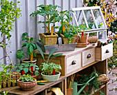 Vegetable and summer flower seedlings