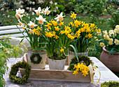 Narcissus 'Tete a Tete' 'Kate Heath' (Narzissen) auf Holztablett