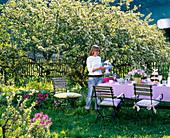 Gedeckter Tisch vor blühendem Malus (Apfelbaum)
