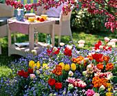 Baumscheibe bepflanzt mit Tulipa 'Orange Princess' 'Monte Carlo'