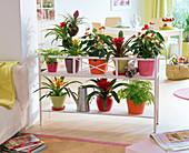 Blumenbank als Raumteiler mit Guzmania, Anthurium (Flamingoblume), Adiantum