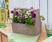 Kräuterkiste mit Allium (Schnittlauch), Chamomilla (Kamille),