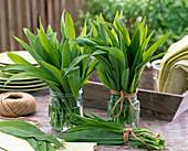 Sträuße aus frisch geerntetem Allium ursinum (Bärlauch)