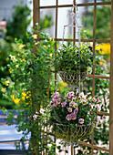 Korb - Etagere aus Draht bepflanzt mit Viola cornuta