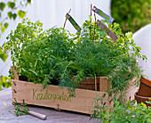Obststiege als Kräutergarten