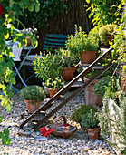 Alte Eisentreppe als Pflanzentreppe umfunktioniert