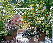 Rosa 'Lisa' (Beetrose von Noack), Lilium asiaticum 'Lagio' (Lilien)