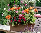Duftkasten mit Lilium 'Orange Pixie' (Lilien), Dianthus Devon