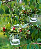 Windlichter mit Kränzen aus Fragaria vesca (Walderdbeeren) an Zweig von Prunus