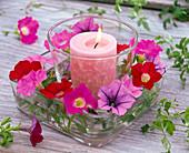 Kerze in Glas in Untersetzer mit Petunia (Petunien)