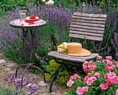 Stuhl und Tisch an Beet mit Lavandula 'Hidcote Blue' 'Munstead'