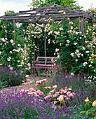 Pavillon mit Rosa 'New Dawn' (Kletterrosen), robust, öfterblühend