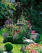 Buxus (Buchs - Rondell) mit Rose (Rosen), Lavandula (Lavendel)