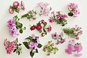 Rosa Blütentableau Balkonblumen