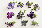 Blau - violettes Blütentableau Balkonblumen