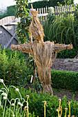 Vogelscheuche aus Stroh im Bauerngarten, Buxus (Buchs)