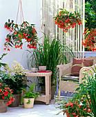 Schattenbalkon mit Begonia Summerwings 'Orange', Belleconia