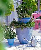 Blaue Kübel übereinandergestellt und mit Kräutern bepflanzt