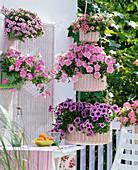 Petunien - Balkon