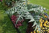 Sommerrabatte mit Blumen und Gemüse