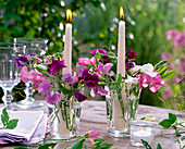 Lathyrus odoratus (Duftwicken) in Gläsern mit Kerzen